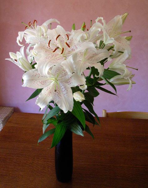 20091117-lillies