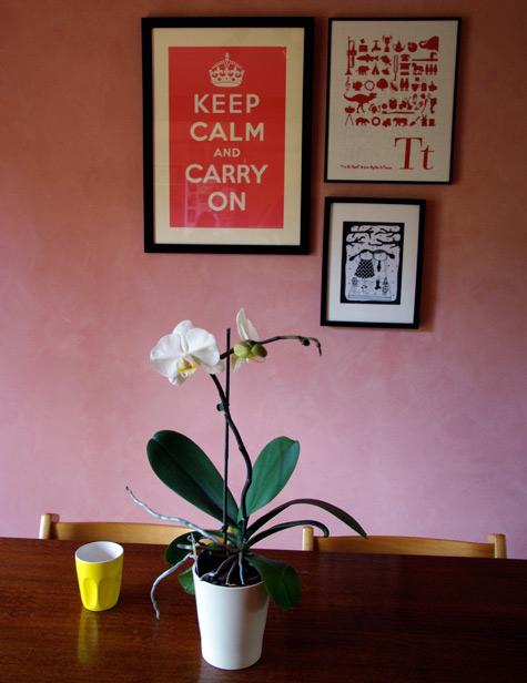 My Phalaenopsis Orchid