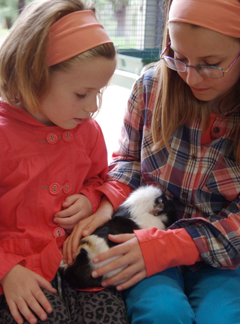 "Amelia and Michaela with ""Patch"" the guinea pig"
